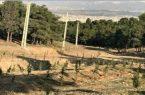 همکاری شهرداری تهران و سازمان جنگلها، مراتع و آبخیزداری کشور جهت درختکاری در نوار مرزی دامنه جنوبی البرز