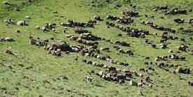 آزادسازی ۴۲۰۰ هکتار از مراتع قرق شده بیرجند